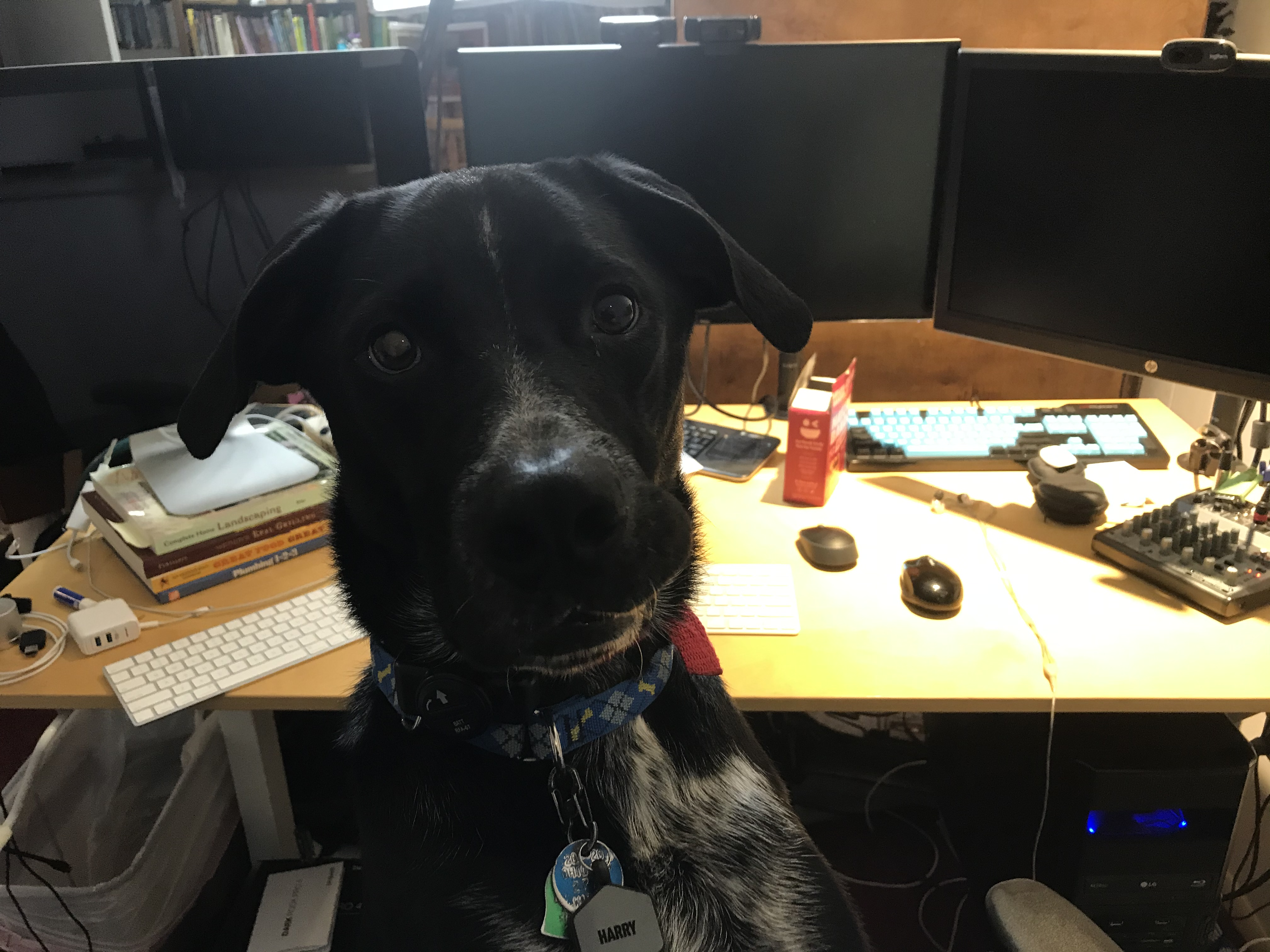Dog at computer setup